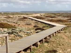Wege durch die Strandbotanik