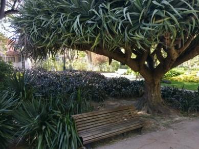 Zimmerpflanzen sind hier Bäume