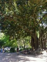 Jardim de Estrela- Gummibaum!