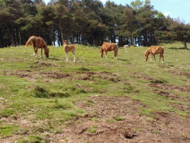 Pferde im Gebirge