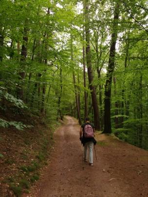Durch den Thüringer Wald...