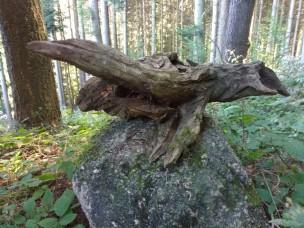 Hier denken wir an die liebe Angelika! Was würde ihr Künstlerauge wohl in dem Holzstück erkennen? Gell!!