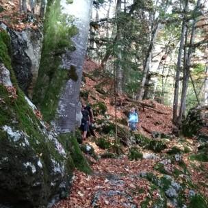 Unsere Waldläufer...