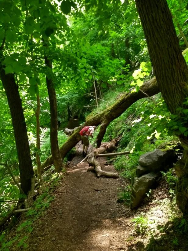 A klettert über Bäume