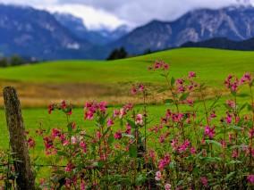 Fußweg über den Galgenberg