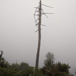Statt des Ausblicks aufs Meer - nur Nebel und Regenwolken...