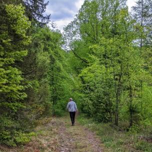 Der grüne Maienwald