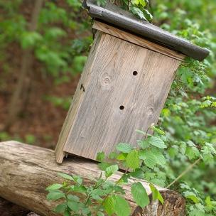 Ein verlassener Hornissenkasten