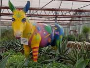 Ein 'Eschbacher Esel' - später mehr
