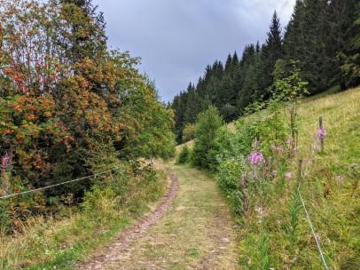 Weidenröschen und immer wieder reichlich Früchte tragende Vogelbeerbäume als bunte Tupfer in der August-Landschaft.